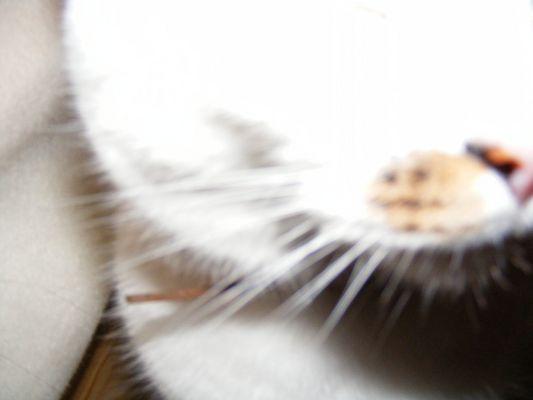 Jeu du chat et de la souris.