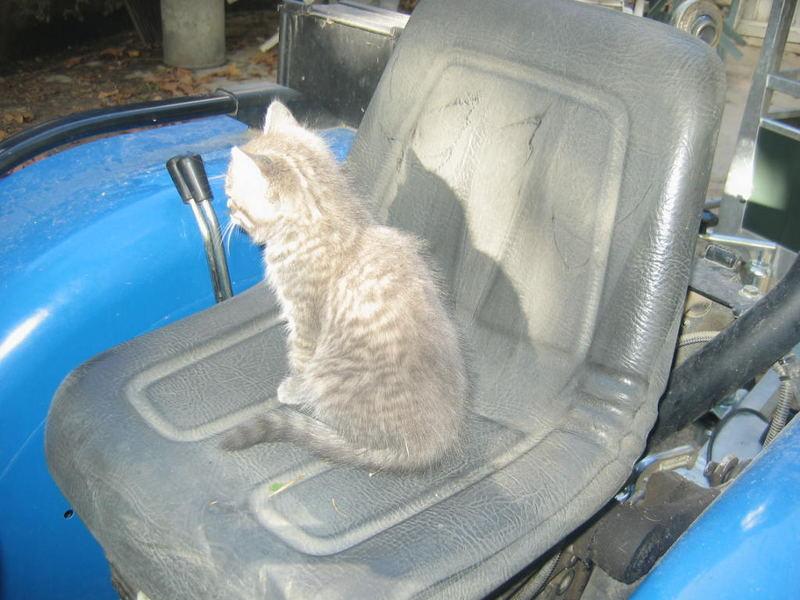 Jeune conductrice