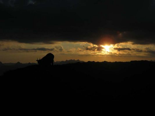 Jeune étagne (femelle du bouquetin) lever du soleil