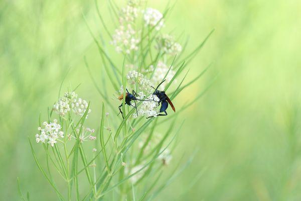 jeux d'insectes