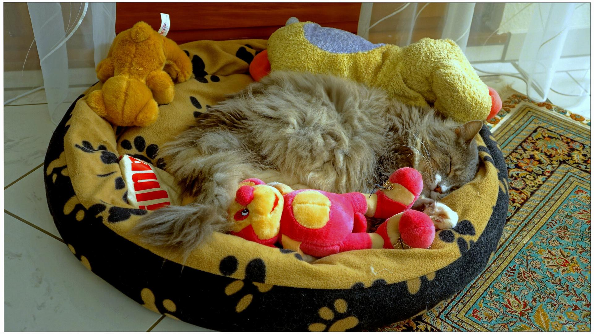 Jico schläft mit Wicky-Emily`s Plüschtieren (Jico está durmiendo con los peluches de Wicky-Emily)