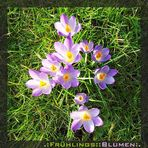Jippie - der Frühling kommt!