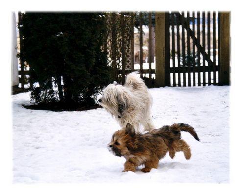 Jiva und Aisha im Schnee