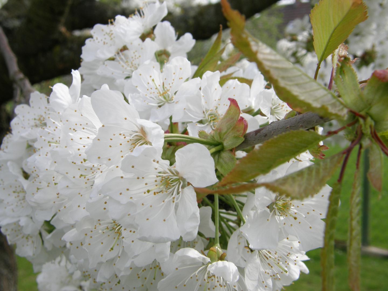 jo jetzt is Frühling................;-)