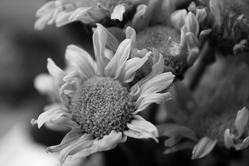 Joan,und ihre Blumenpflück-Künste.