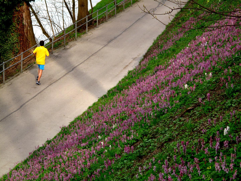 Jogger und die Blumen