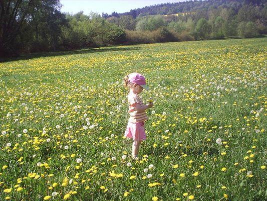 Johanna in der Sommerwiese