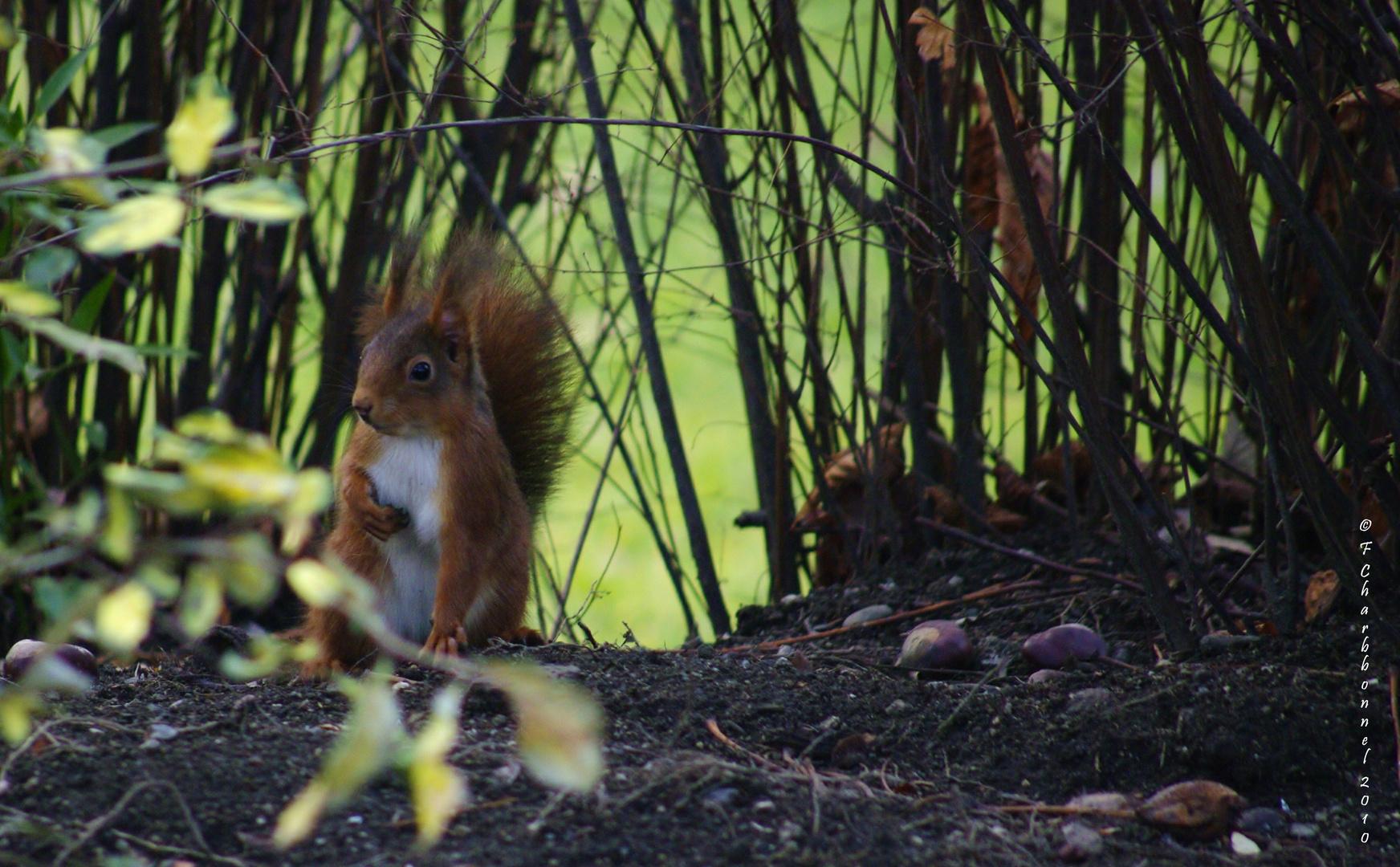 jojo l'ecureuil