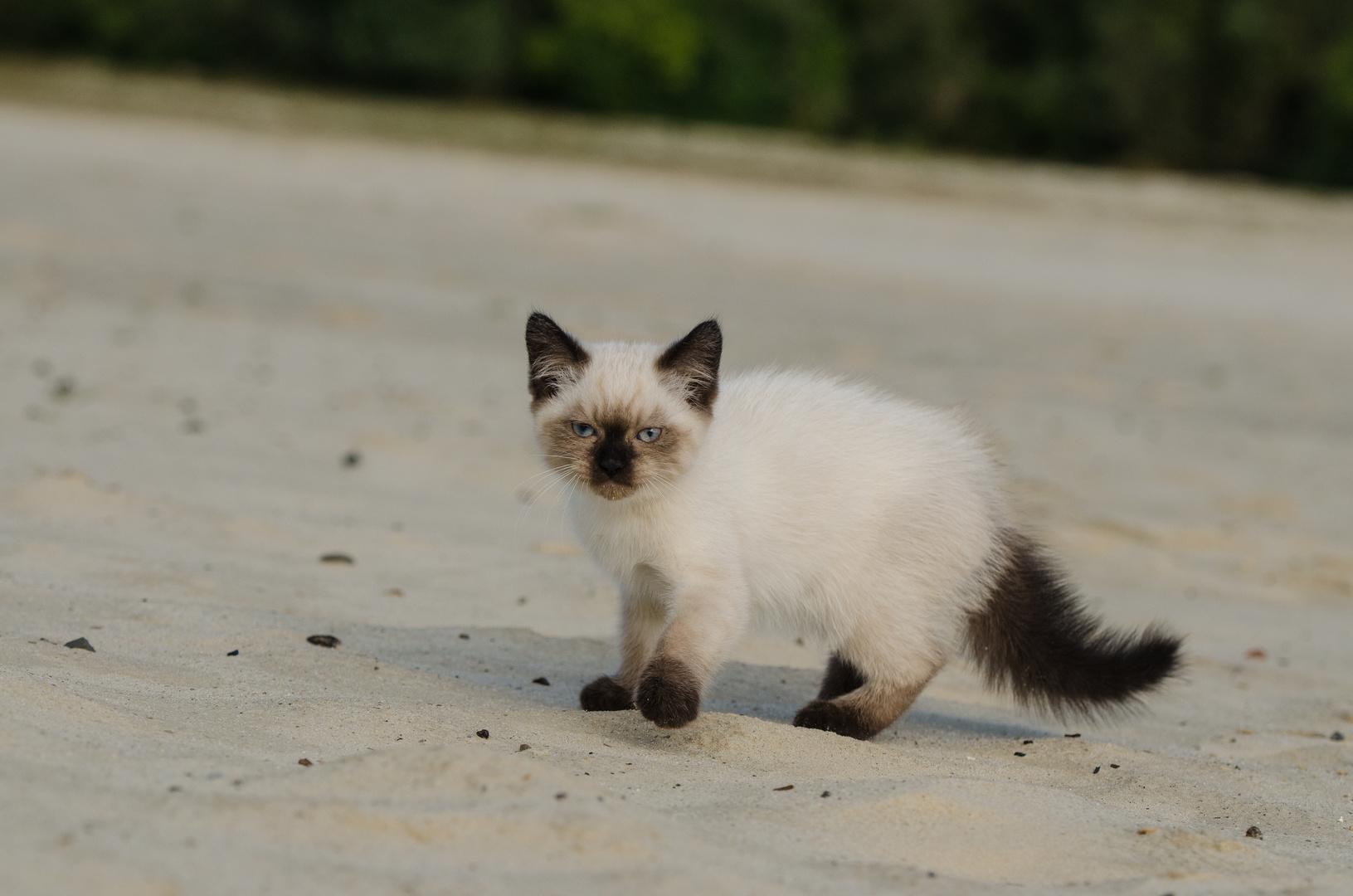 Jojo's erster Tag am Strand