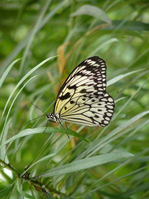 Joli papillon au petit matin