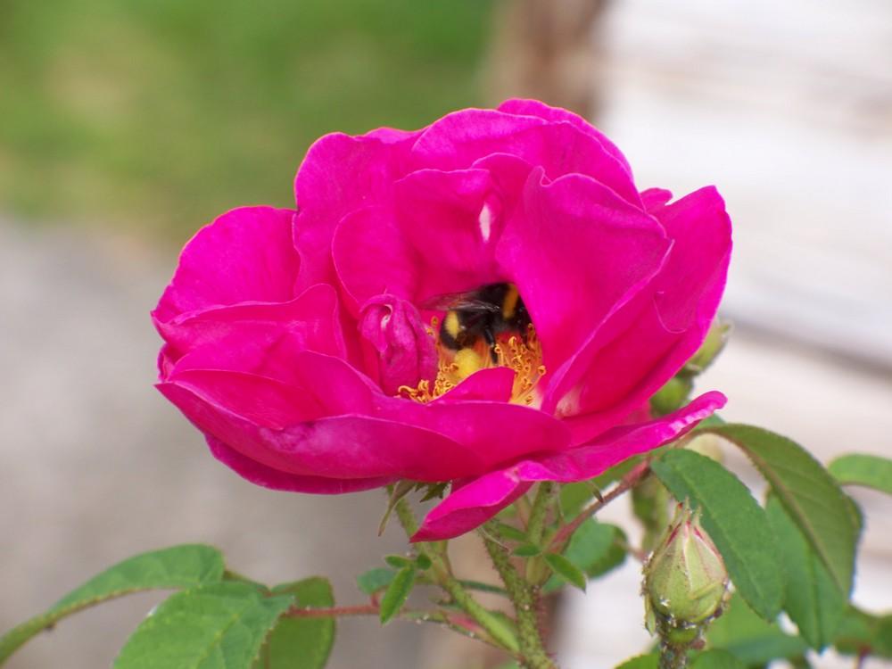 Jolie abeille!!!
