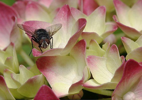Jolie mouche sur de jolies fleurs