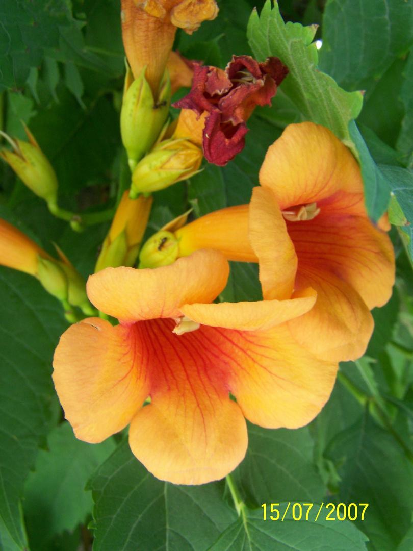 jolie plantes