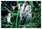 Jolies fleurs du jardin ....