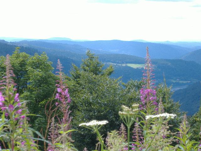 Jolies fleurs nageant dans les montagnes