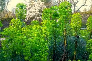 jolies nuances de vert