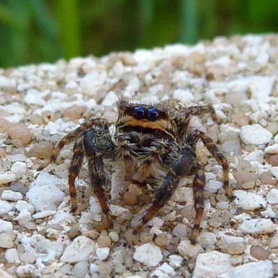 Jolis yeux cette tite araignée lol