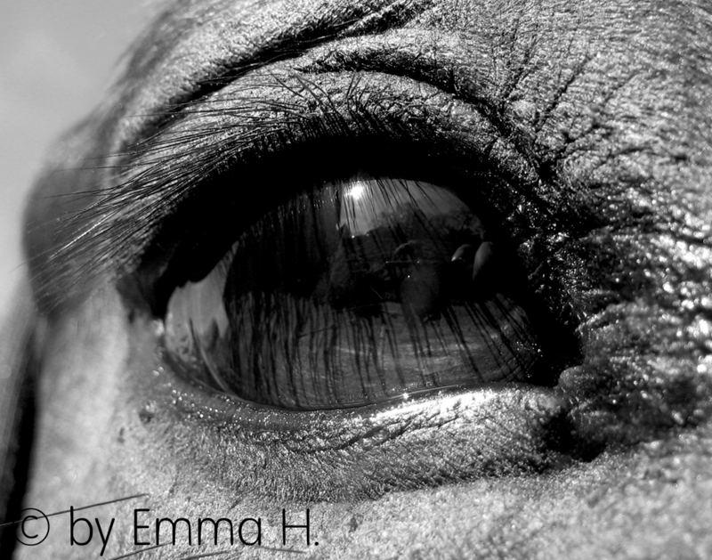 Jollys eye..