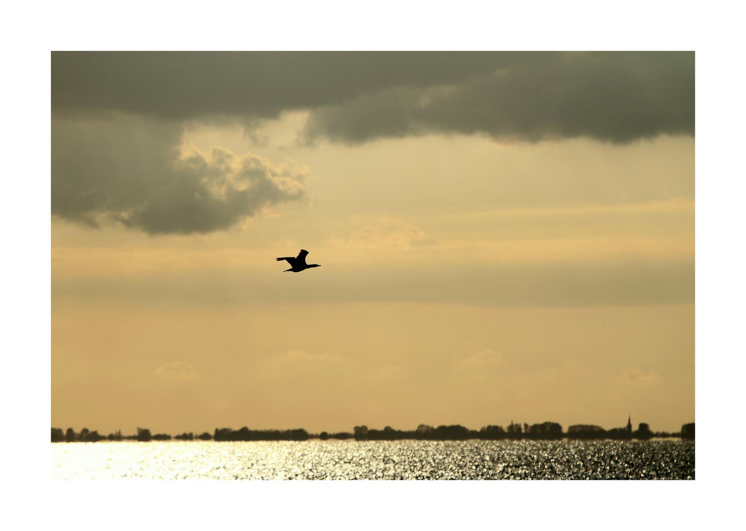 jonathan ... le cormoran