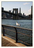 Jonathan Livingston Seagull in Brooklyn