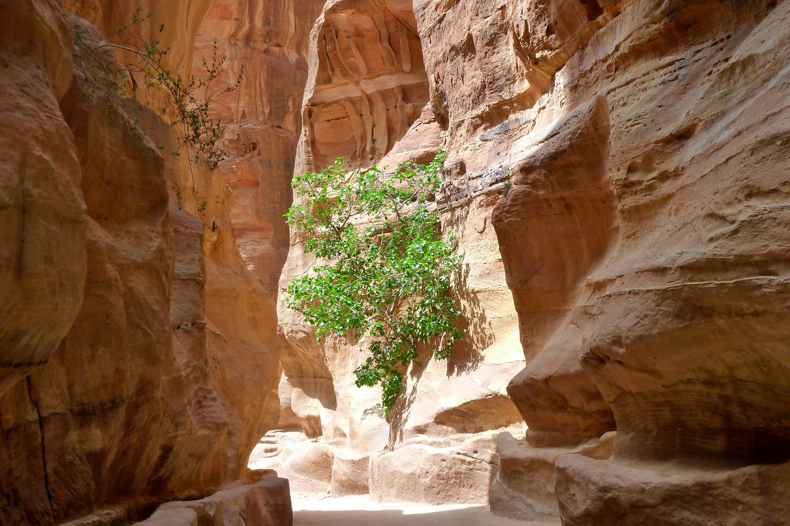 Jordanien - Petra