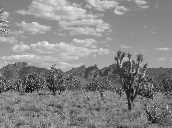 joshua three in arizona