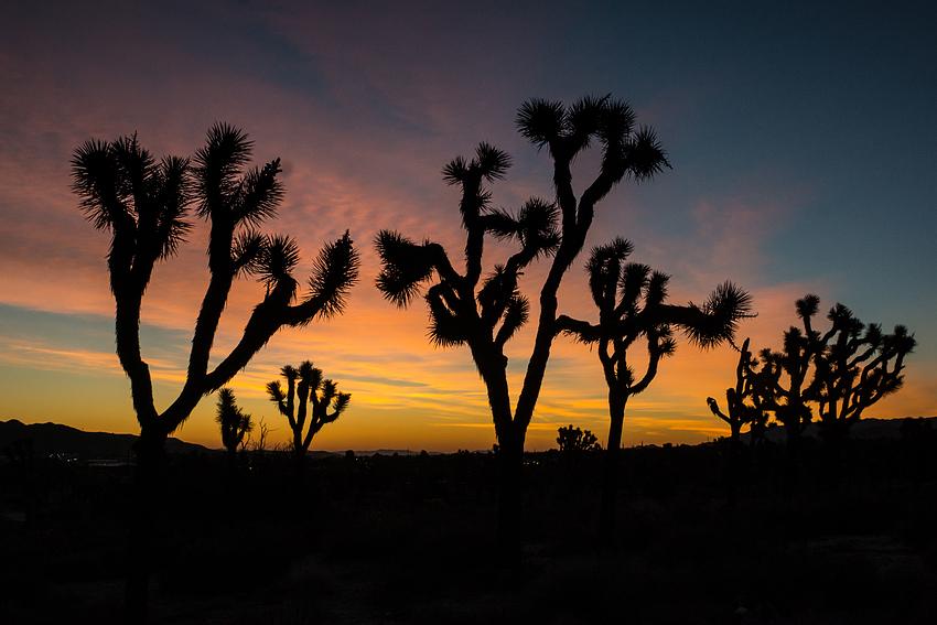 Joshua Tree National Park kurz vor dem Sonnenaufgang