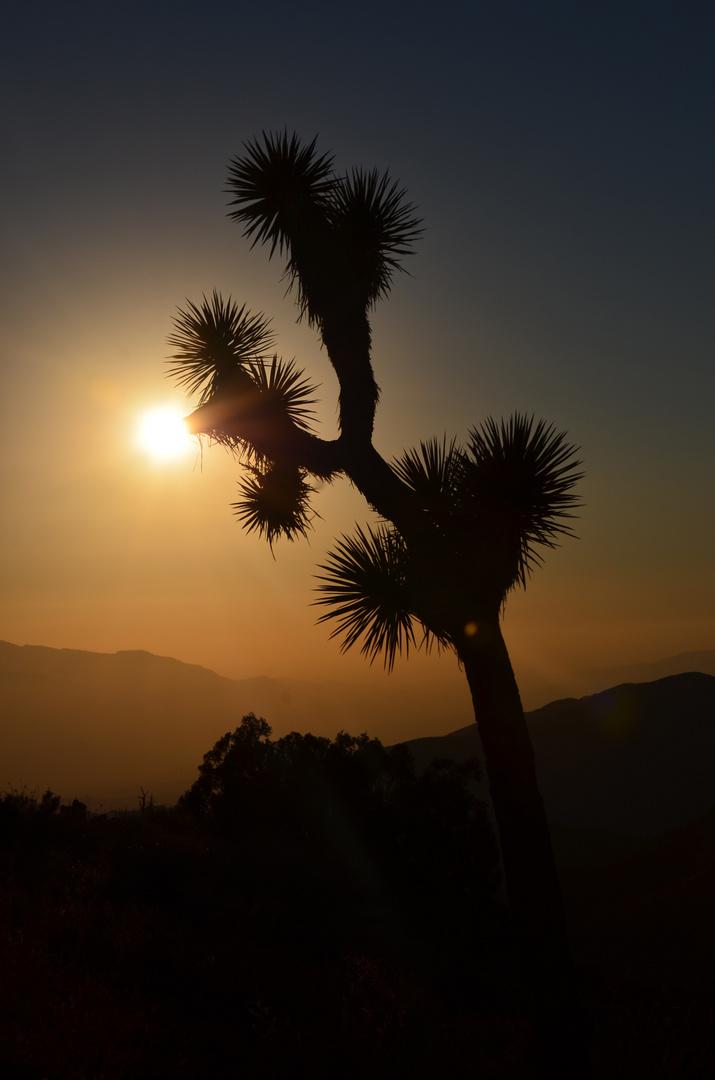 Joshua Tree Nationalpark im Sonnenuntergang