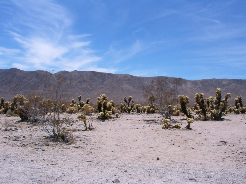Joshua Tree Nationalpark, Mojave Wüste, Kalifornien, Juli 2002