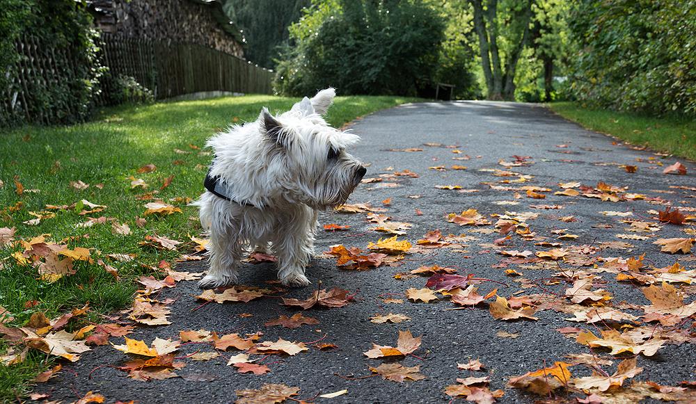 Josie beim Herbstspaziergang
