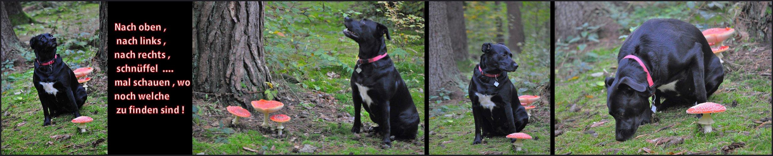 Josie & Rosi allein im Wald