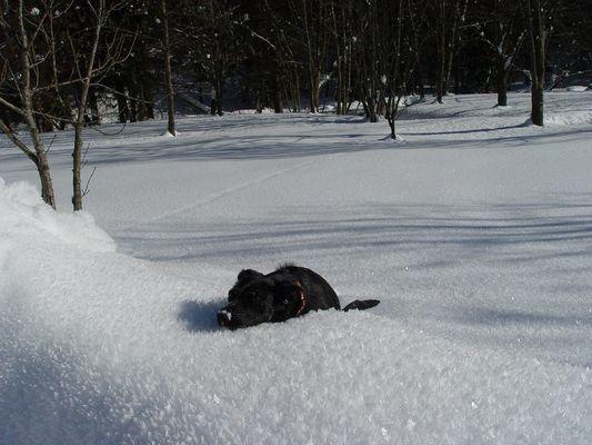 Joy! Den Schnee bis zum Bauch