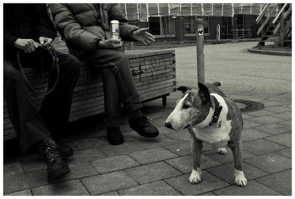 Joy.. eine alte hundedame von St. Pauli...