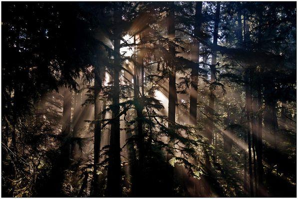 Juan de Fuca Provincial Park - Vancouver Island - Kanada