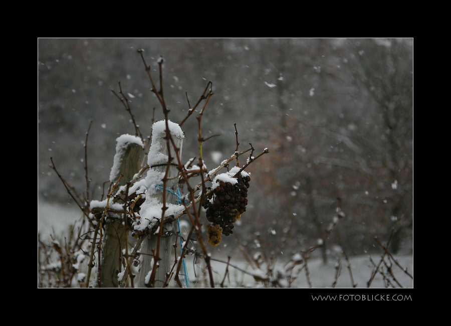 Jubel!! Es schneit!!!