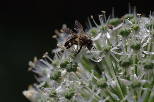 Juchuuh, welch ein Pollen-Angebot