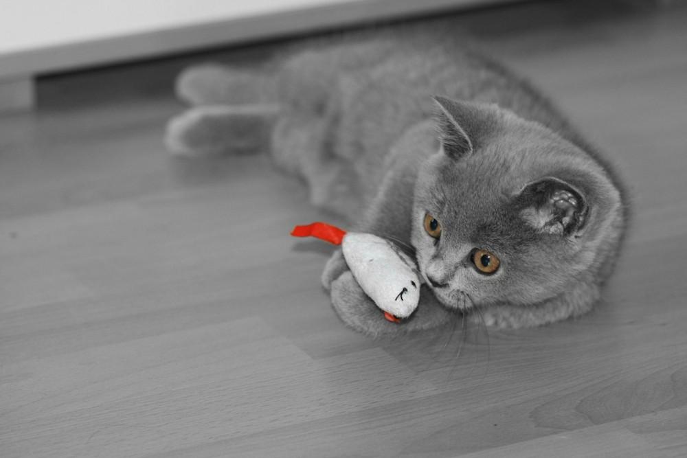 Judy und ihre Katzenminz-Maus
