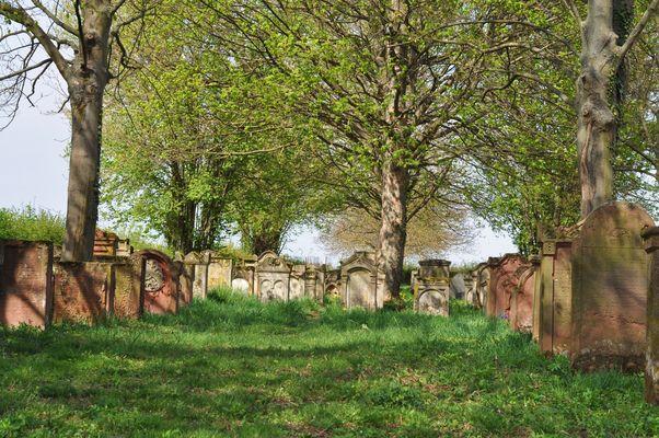 Jüdischer Friedhof Lustadt Weingarten mitten auf dem Feld frei zugängig