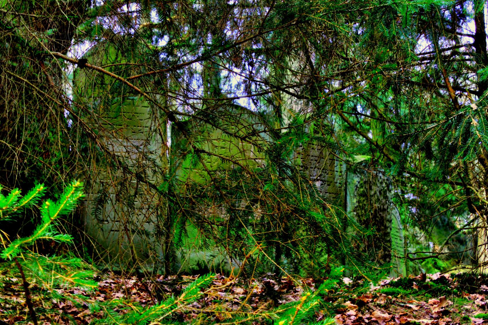 Jüdischer Waldfriedhof2