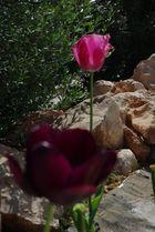 juego de tulipanes