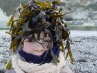 Juegos con algas del mar (Normandia)
