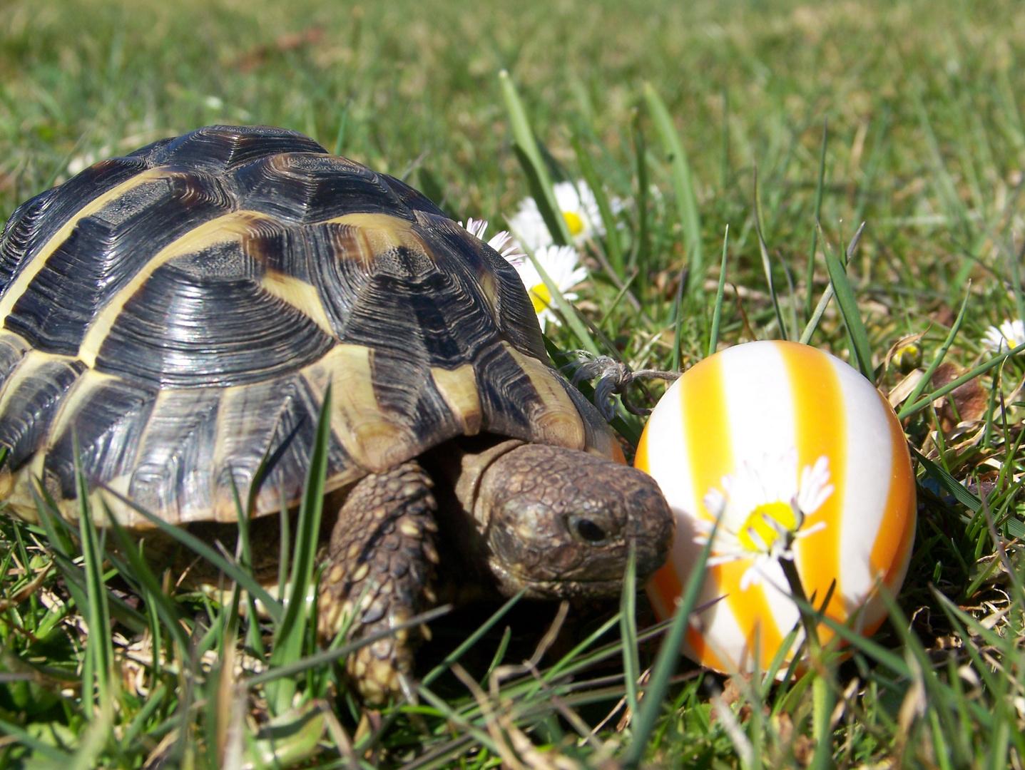 JUHU habe ein Osterei gefunden :-)