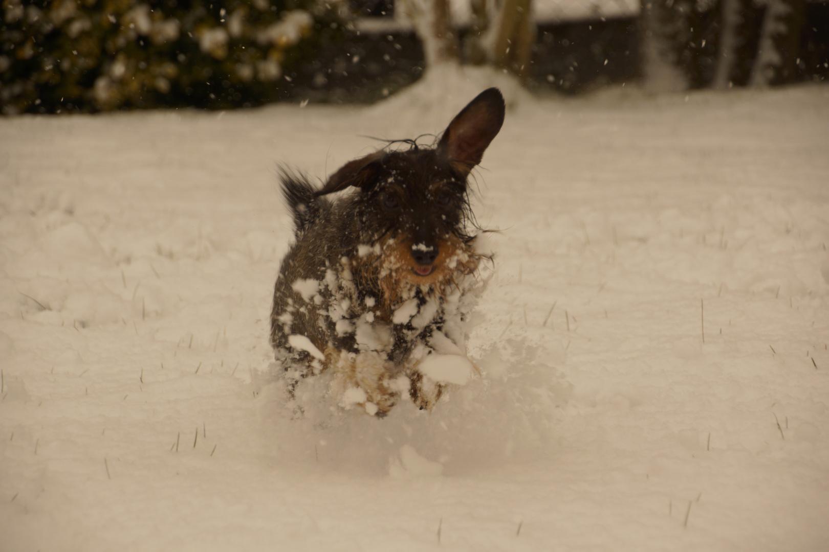 Jule im Schnee 2