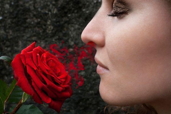Julia und die Rose