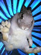Jumpin' Rabbit