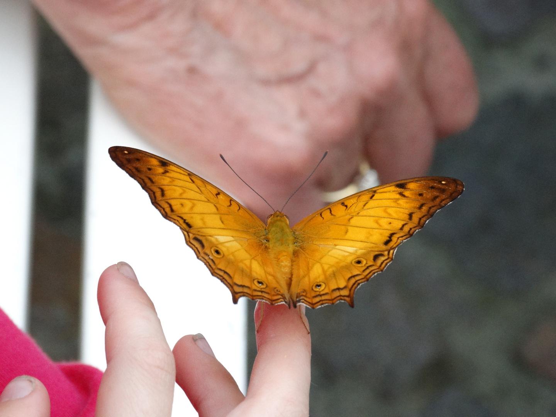 Jung und Alt mit Schmetterling