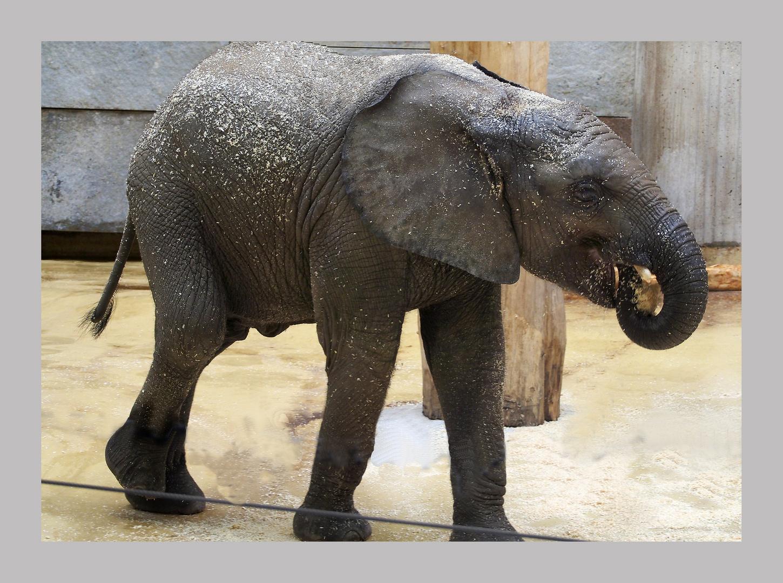 Jung und fröhliches Elefantenmädchen 1