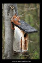 junge Eichhörnchen