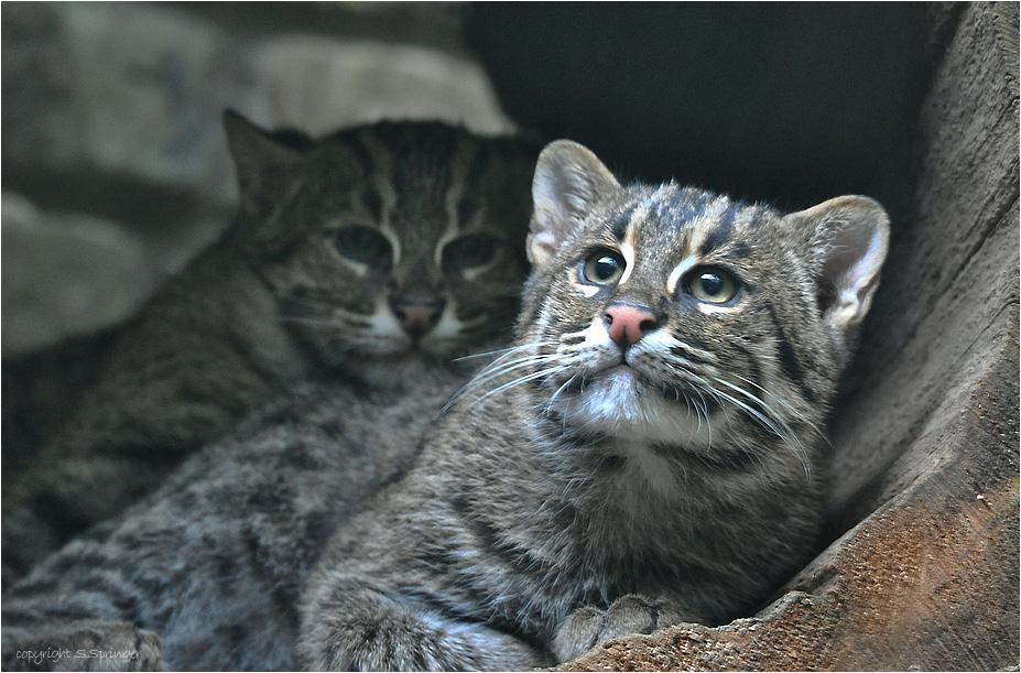 junge Fischkatzen in Ihrem Versteck....:o)