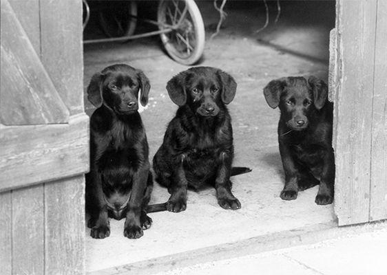 junge hunde